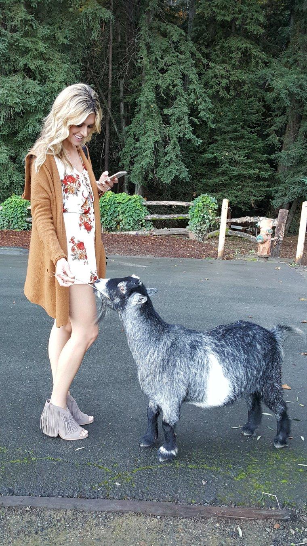 castello-feeding-goats-2